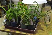 Sale 8341 - Lot 1021 - Two Trays of Orchids