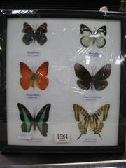 Sale 8107A - Lot 1584 - Butterfly Display, framed