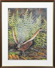 Sale 8295 - Lot 98 - Charles A. Newman (working 1920s) - Lyrebird, 1983 48 x 36cm