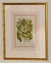 Sale 8048A - Lot 47 - Horticultural print of a Lily