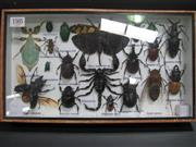 Sale 8107A - Lot 1505 - Insect Display incl Scorpion & Rhinoceros Beetle, framed