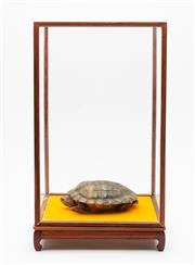 Sale 8890T - Lot 91 - A taxidermy turtle in elongated glass display cabinet, small corner cracks to glass panels (2), turtle length 16, height of box 44cm