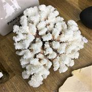 Sale 8758 - Lot 68 - Large Piece of Coral