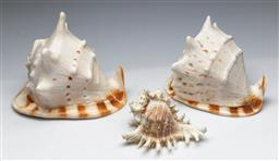 Sale 9156 - Lot 7 - Two large conch shells together with another (L:23cm)