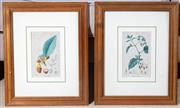 Sale 8550H - Lot 125 - Nine C19th Jean Francois Turpin hand coloured botanical engraving studies including cucumber, engraving by Lambert, image size H 17...