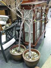 Sale 7937A - Lot 1125 - Pair of Potted Trees