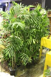 Sale 8499 - Lot 1032 - Collection of Indoor Plants