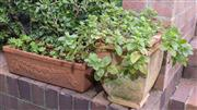 Sale 8575H - Lot 96 - Four various terracotta pots, planted with herbs