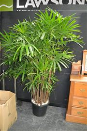 Sale 8046 - Lot 1014 - Large Rhapis Palm