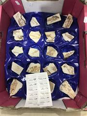 Sale 8893 - Lot 1048 - Box of Fossils with ID Chart