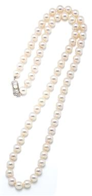 Sale 9029 - Lot 356 - AN AKOYA CULTURED PEARL NECKLACE; 7.5 - 7.8mm round pearls of good cream white colour and lustre to a silver pearl set clasp, length...