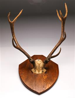 Sale 9119 - Lot 167 - A pair of wall mounted faux stag horns (54cm)