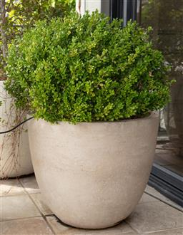 Sale 9130H - Lot 79 - A Japanese Buxus in a composite pot.