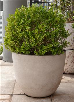 Sale 9130H - Lot 78 - A Japanese Buxus in a composite pot.