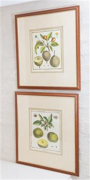 Sale 8550H - Lot 179 - A pair of framed printed botanical studies of apples and pears, each frame size 47 x 52cm