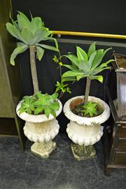 Sale 7987A - Lot 1003 - Pair of Urn Form Planters with Plants