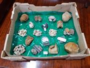 Sale 8740 - Lot 1299 - Box Containing Fossils