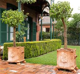 Sale 9260M - Lot 2 - A pair of standard Ficus in Victorian Gothic style terracotta planters, H 57 W 54cm