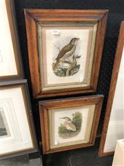 Sale 8845 - Lot 2086 - Pair of Hand-Coloured Plates from Cassells Book of Birds in antique frames