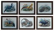 Sale 8815A - Lot 28 - A set of six ornithological plates including different species of pheasants, all image size 70cm x 57cm
