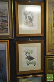 Sale 8250C - Lot 2027 - S.Carter - (2 works) - Birds, watercolours, 34x26cm, each signed lower