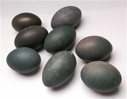 Sale 9128 - Lot 31 - Collection of 8 emu eggs