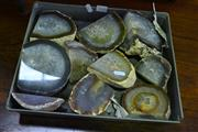Sale 8087 - Lot 1030 - Tray of Brown Cut - Polished Agate