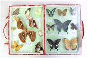 Sale 8855 - Lot 53 - Butterfly And Moth collection (Some Losses)