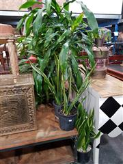 Sale 8769 - Lot 1035 - Collection of Indoor Plants