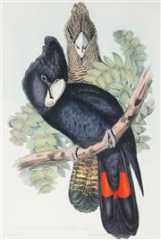 Sale 8867 - Lot 559 - After J Gould & H.C Richter - Red-Tailed Black Cockatoo (Calyptorhynchus Macrorhynchus) 52 x35 cm