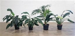 Sale 9188 - Lot 1471 - Collection of four indoor plants - Spath and Kentia (H:136cm)