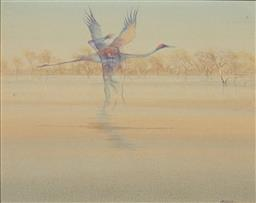 Sale 9184A - Lot 5049 - TOM MCAULAY (1946 - ) Sprit Figure and Brolga oil on canvas 38 x 47.5 cm (frame: 54 x 65 x 3 cm) signed lower right
