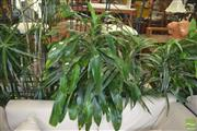 Sale 8331 - Lot 1302 - Collection of Indoor Plants