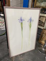Sale 8936 - Lot 2094 - James Gordon Iris colour pencil, 115 x 75.5cm, signed