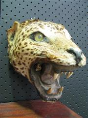 Sale 8331A - Lot 582 - Jaguar Head - trophy mount