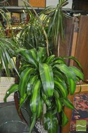 Sale 8331 - Lot 1512 - Collection of Indoor Plants