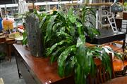 Sale 8147 - Lot 1042 - Collection of Plants