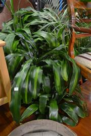 Sale 8099 - Lot 844 - Collection of Indoor Plants