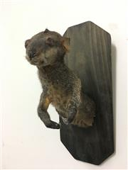 Sale 8331A - Lot 583A - Taxidermy Wallaby, trophy mount