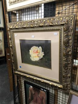 Sale 9172 - Lot 2052 - Pamela Hall  White Rose, 2002, watercolour and gouache frame: 62 x 67 cm, signed