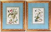 Sale 8956 - Lot 1042 - A Pair of 18th Century English Handcoloured Botanical Engravings - slight foxing (Overall size 81 x 65cm)