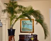 Sale 7997 - Lot 84 - A LARGE POTTED FERN