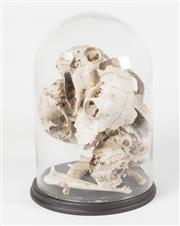 Sale 8342A - Lot 29 - A glass cloche on black timber base containing animal skull fragments, H 40cm