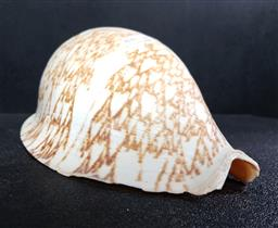 Sale 9254 - Lot 2388 - A large seashell with a reproduction ape skull and real small animal skulls