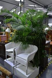 Sale 8039 - Lot 1034 - Collection of Plants