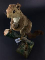 Sale 8567 - Lot 821 - Taxidermy Red Squirrel, on mount