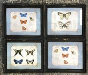Sale 8945 - Lot 2096 - Set Of Timber Framed Ornithological Prints Depicting Butterfiles (29.5 x24.5cm)