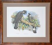 Sale 8011A - Lot 100 - William T. Cooper (1934 -) After. (2 works) - Yellow Tailed Black Cockatoo & Baudins Black Cockatoo