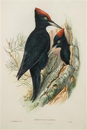 Sale 8541 - Lot 2065 - John Gould Print (1804 - 1881) - Dryocopus Martius, Great Black Woodpecker 54.5 x 36.5cm
