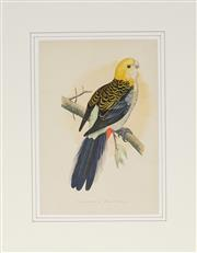 Sale 8903 - Lot 2034 - Artist Unknown - Pale Headed Rosella 23.5 x 16 cm